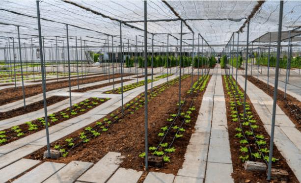 Rafia tela, el elemento sostenible perfecto en la agricultura